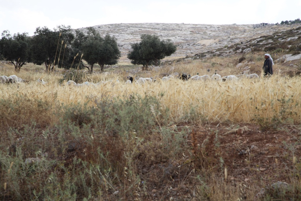 20140607_Taayush-Shepherd0903-Edit